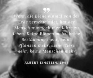 Umweltproblem Artensterben: Zitat Biene Albert Einstein
